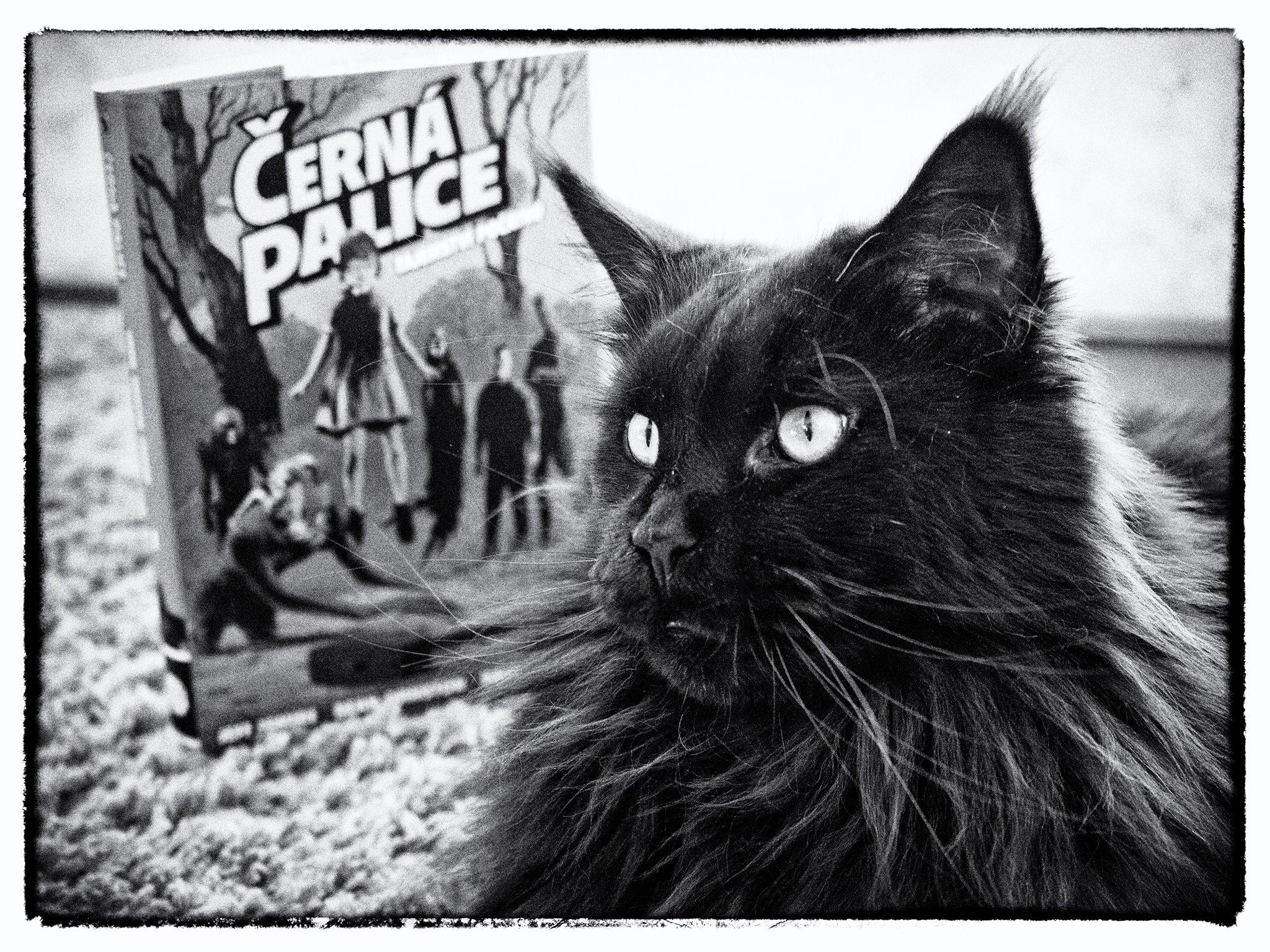 Myslím, že černá kočička